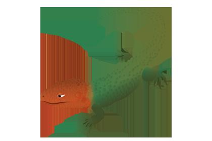 Kaaimanteju